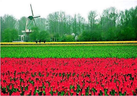 荷兰赏花-荷兰+德国+法国+瑞士+意大利13日跟团游(金色山口 +比萨斜塔+湖景酒店)